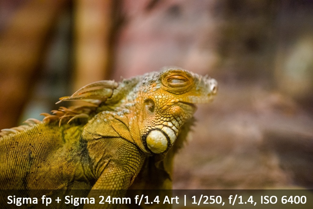 Sigma fp; The world's smallest and lightest full-frame camera - a first look.